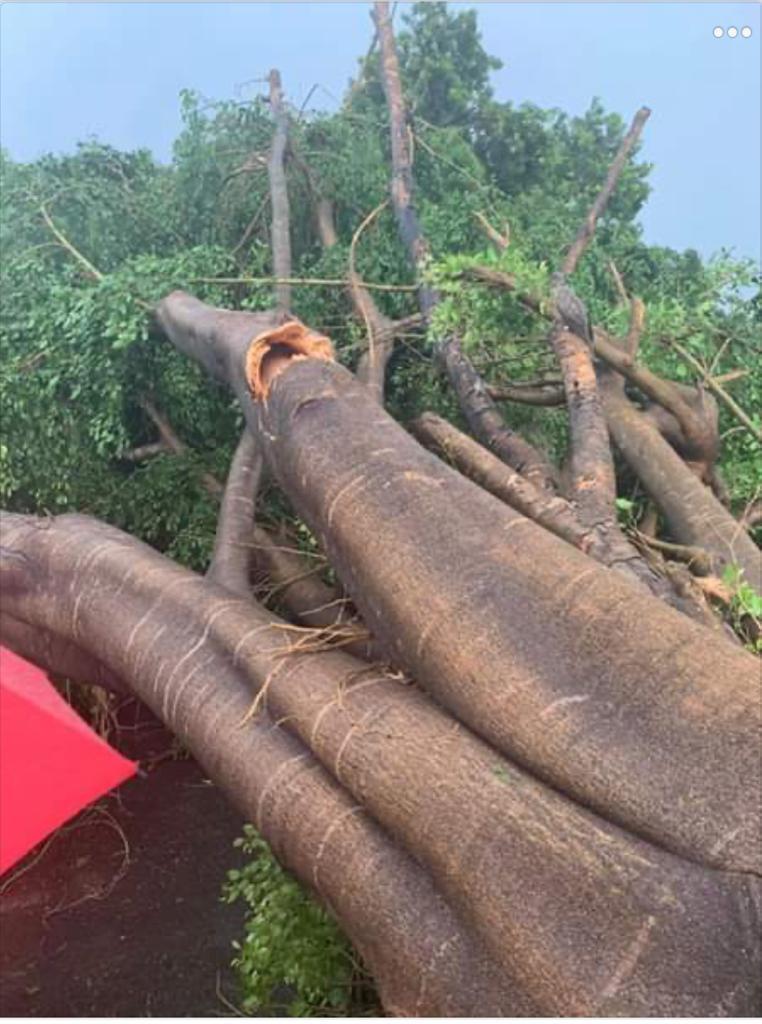 Tornado derriba árboles casa y vehículo en Mao