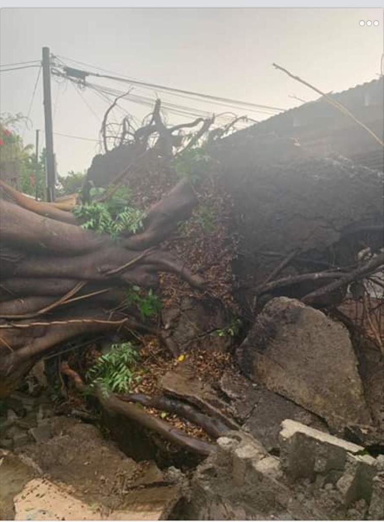 Tornado derriba árboles casa y vehículo en Mao4