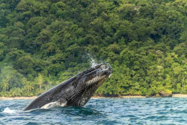 ballena se trago a un hombre y luego lo escupio vivo1